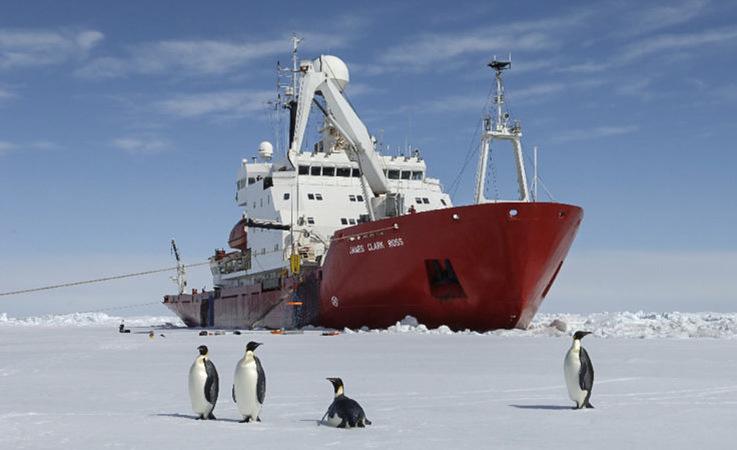 Kaiserpinguine auf dem Meereis vor dem Eisbrecher RRS James Clark Ross. Dickes Meereis macht das