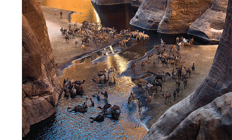 Kamelherde bei der Tränke in der Sahara.